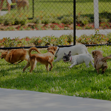 Large Dog Park at Avalon Senior Living Apartments